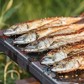 Grilled Peppy Mackerel Fillets