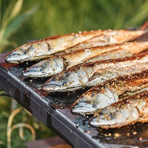Grilled Peppy Mackerel Fillets