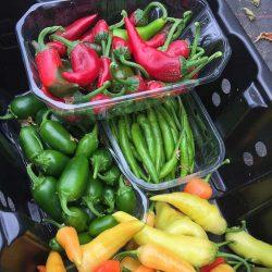 fresh chillies 2018